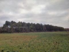 Resteigne, parcelle très bien située, 1ha16a35ca, mélange pins noirs, pins sylvestres.
