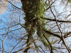 Très belle forêt de 4 hectares 17 ares 92 centiares